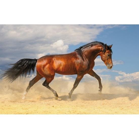 Bureau onderleggger PVC 44 x 68 cm design paard