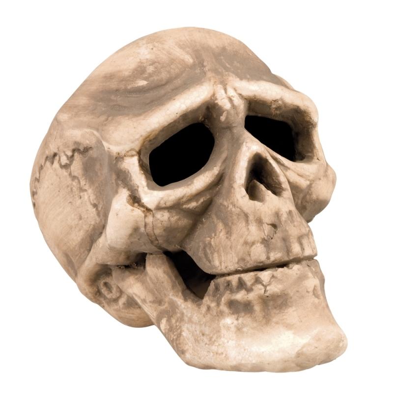 Decoratieve schedel van 22 cm