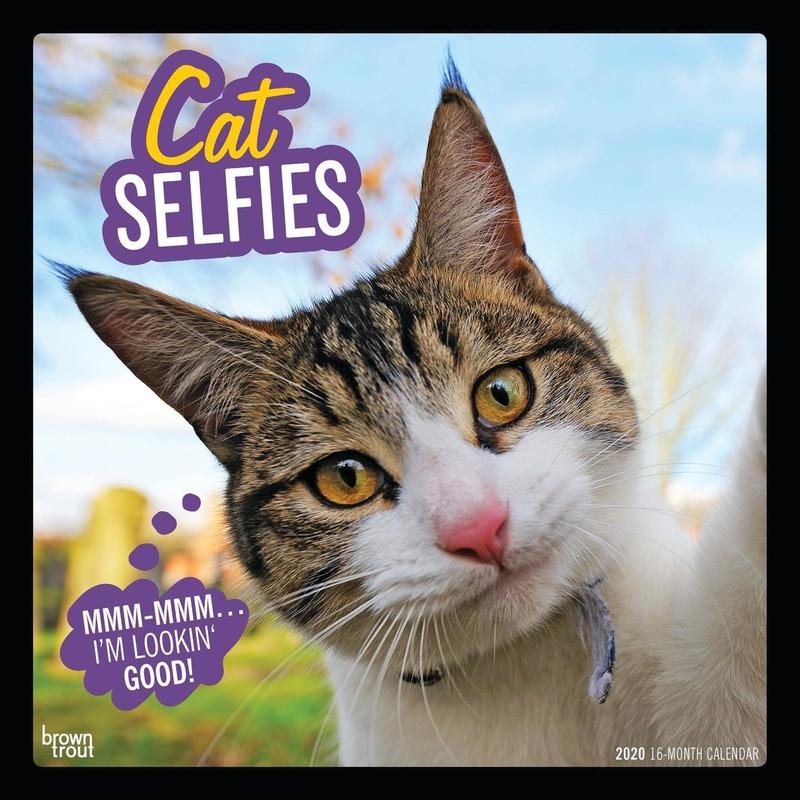 Dieren kalender 2020 katten-poezen selfies