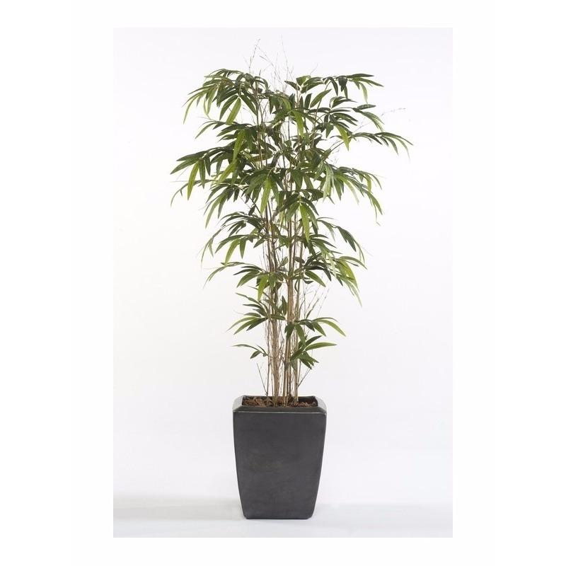 Kantoor decoratie Bamboe Promo 150 cm